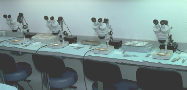 Figure 29.5 - Dissecting stereomicroscopes on cutting table